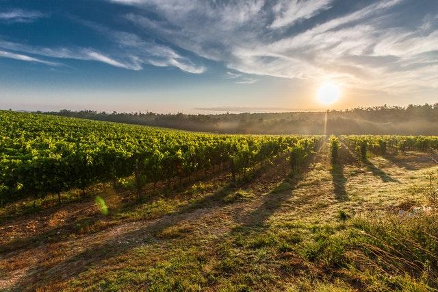 Initiation au vin : comment s'y prendre lorsque l'on n'y connaît rien ?