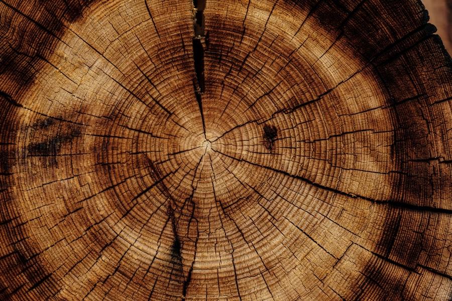 tronc d'un arbre